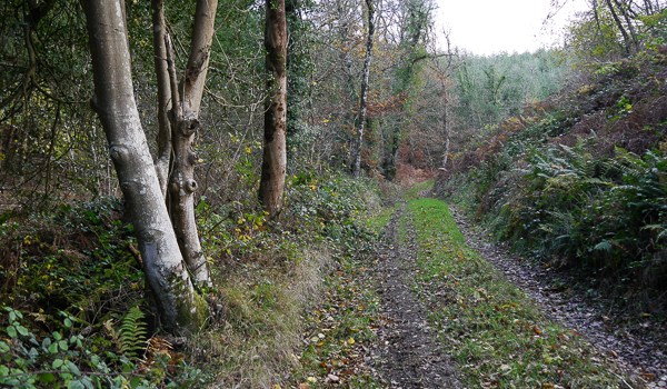 Fingle Woods – Halls Cleave