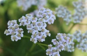 Shel Herb Pic