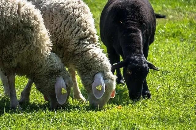 """""""Ich war das schwarze Schaf"""""""