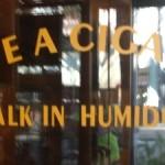 ansaldi_humidor