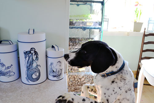 Eyeing The Dog Treat Canisters