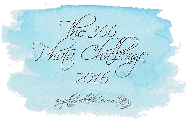 The 366 Photo Challenge 2016