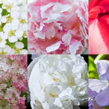 Spring Garden Blooms