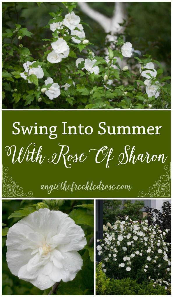 Swing Into Summer Rose Of Sharon Giveaway! | angiethefreckledrose.com