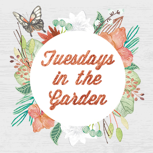Tuesdays In The Garden | angiethefreckledrose.com