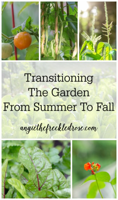 Transitioning The Garden From Summer To Fall | angiethefreckeldrose.com