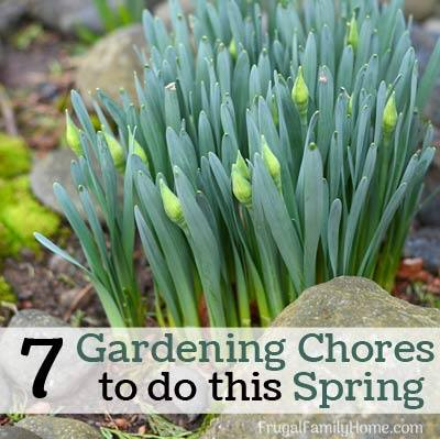 7 Gardening Chores to do this Spring