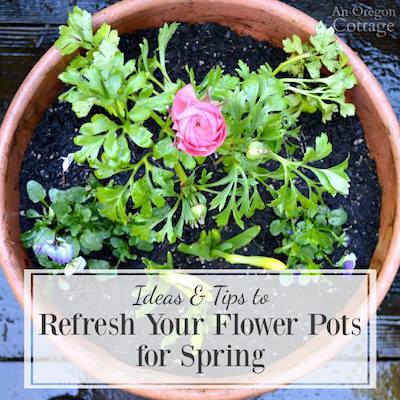 Ideas & Tips to Refresh Your Flower Pots for Spring