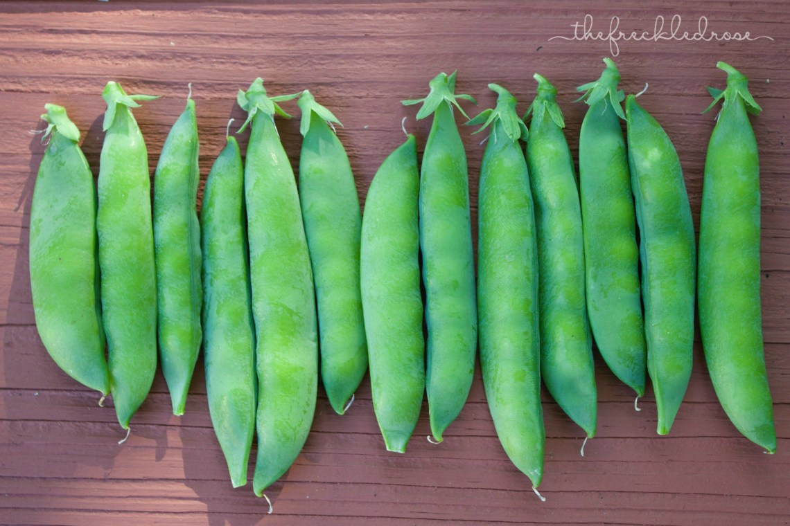 These healthy treats taste best fresh. The longer you want, the starchier they taste. If you can't eat them right away, make sure to store them in the refrigerator or freezer right after picking. Don't be afraid to shell your peas. I've actually found this to be a rather relaxing task!
