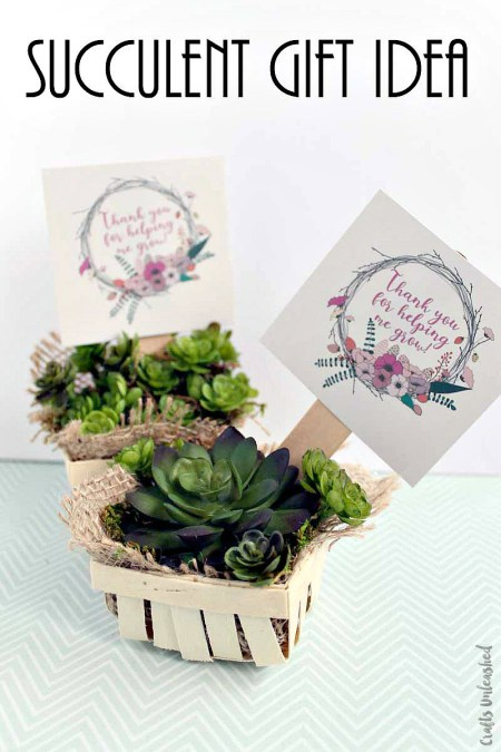 Succulent Gift idea - Consumer Crafts