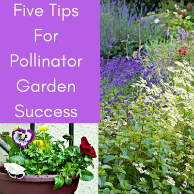 Five Tips for Pollinator Garden Success - Homemade Food Junkie