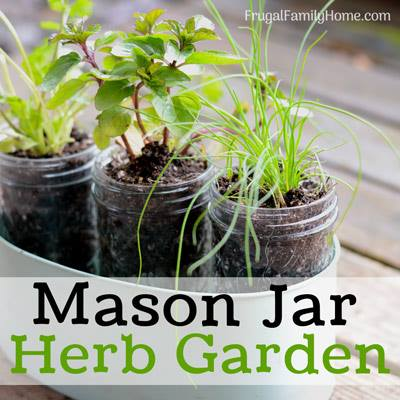 Mason Jar Herb Garden - Frugal Family Home
