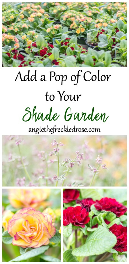 Add A Pop Of Color To Your Shade Garden | angiethefreckledrose