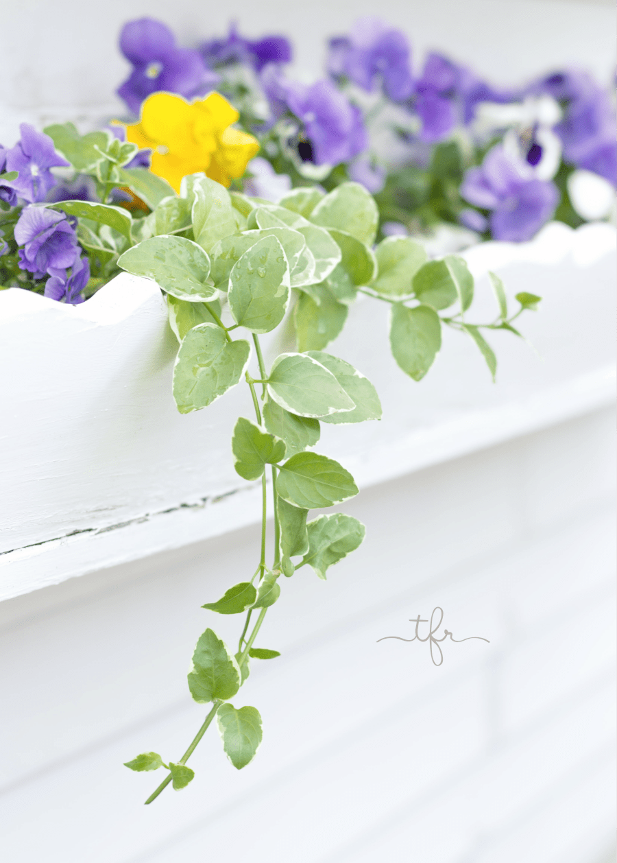 Once you get in a routine, it becomes habit to feed your plants. I like to do it once every few weeks, and my flowers really appreciate it! If you want blooms rather than heavy foliage, make sure to look for a fertilizer higher in potassium and phosphorus.