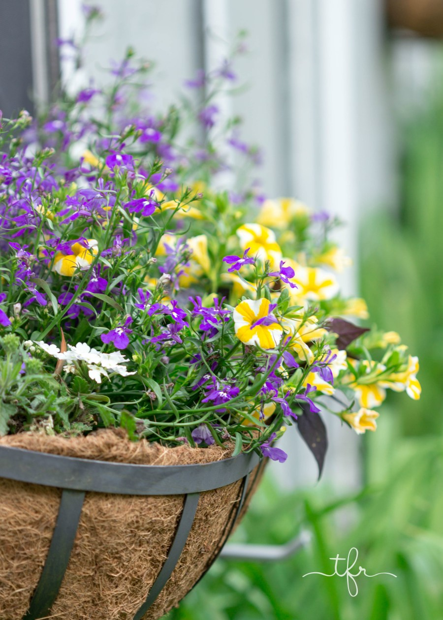 As the season progresses, life always tends to get busy. The weather heats up, and your box will rely on steady watering. Whenever I'm putting together a planter of any kind, I throw in some rain gel. It helps your soil hold in moisture and cuts down on the amount you have to get out your watering can. I use two packets in my box, and it lasts all season long.