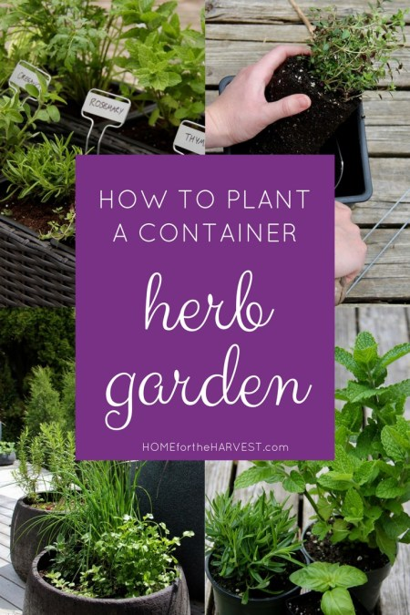How to Plant a Container Herb Garden | Home for the Harvest