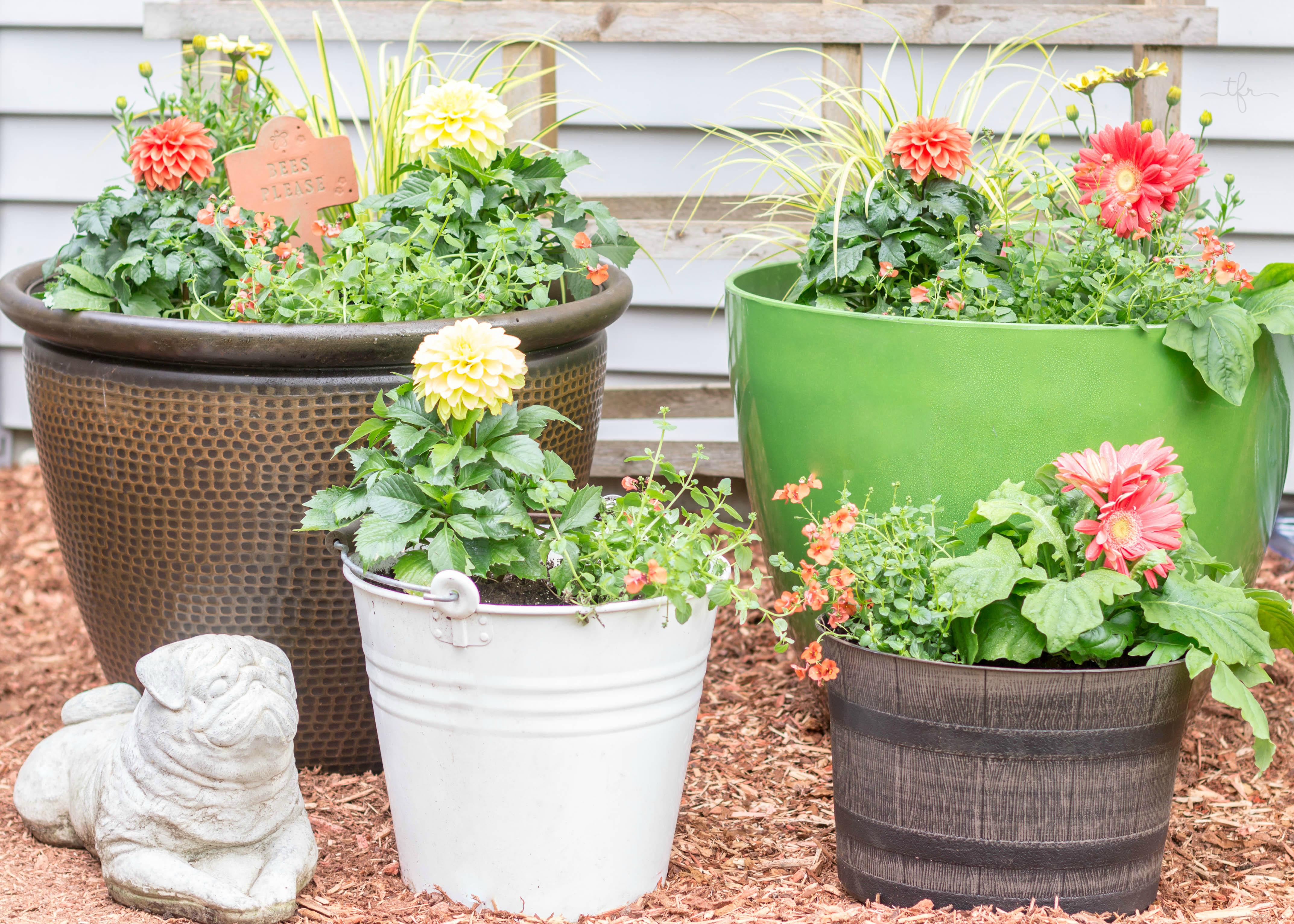 Design Your Own Container Garden Lyrics