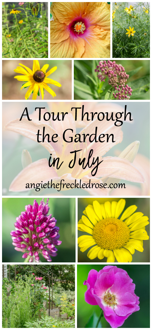Welcome to another week of Tuesdays In The Garden! Summer is flying by, and I've really been enjoying July. Daylilies are in full bloom and dahlias are getting taller each day. I'm still having great success with the clematis I planted in a big container this spring. I'm feeding it regularly, keeping it's feet cool and making sure it has plenty of water.