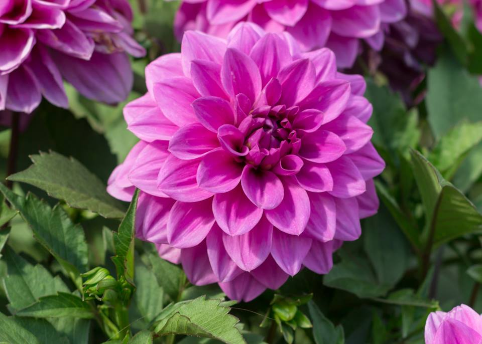 Five Fall Blooming Plants For Your Garden Angie The