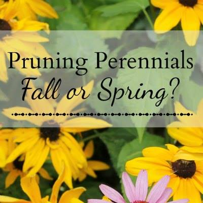 Pruning Perennials Fall or Spring - Hearth and Vine