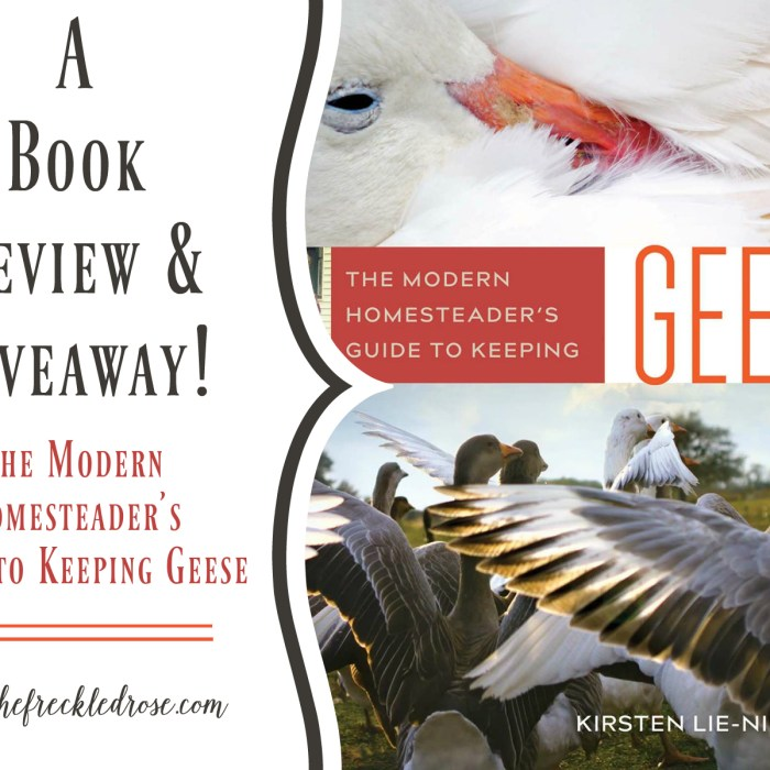 A Book Review & Giveaway: Homesteader's Guide to Keeping Geese