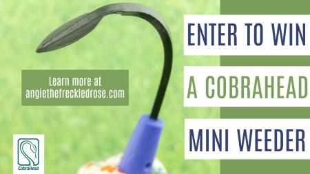 CobraHead Giveaway | angiethefreckledrose.com