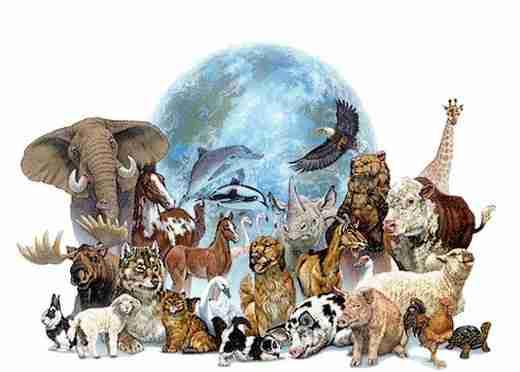 """Résultat de recherche d'images pour """"animaux monde"""""""