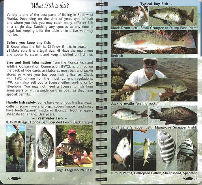Anglers guide to shore fishing southwest florida angler pocket fish identification sciox Images