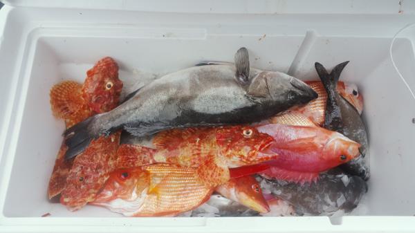 m-Alldayfishing