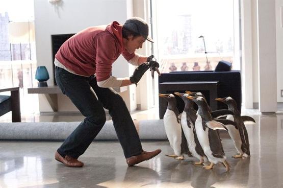 M. Popper et ses pingouins - 2
