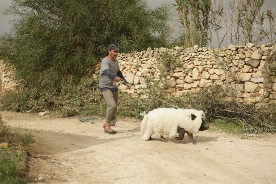 Le Cochon de Gaza - 3