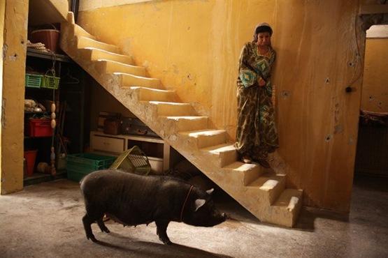 Le Cochon de Gaza - 6