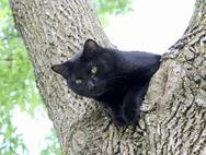 Scaramouche arbre