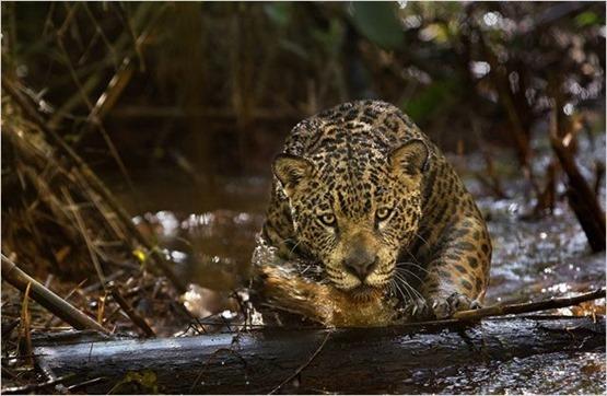 Amazonia - 5