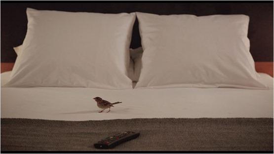 bird people - 5