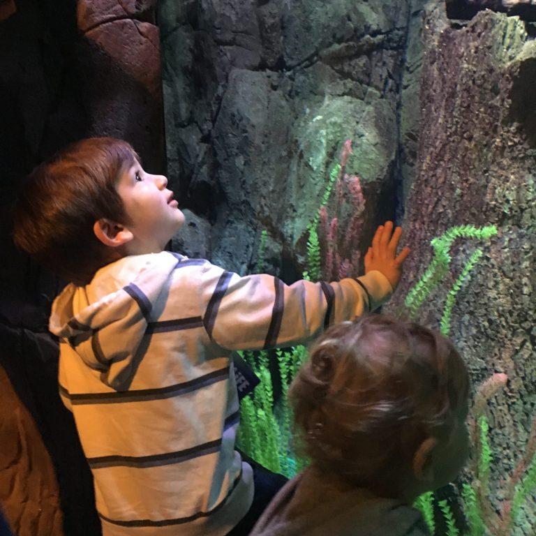 Sea Life di Jesolo – Acquario a misura di bambino