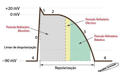 Electrofisiologia. Período refratário
