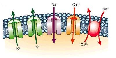 canais ionicos