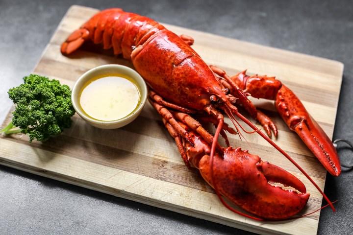 Boiled Lobster Wide