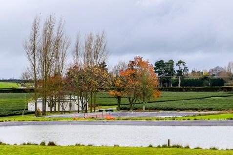 Zealong Tea Estate (Hamilton, New Zealand) 17