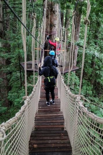 Redwoods 02