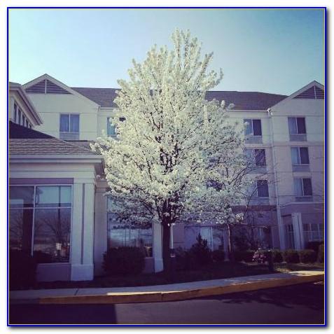 Hilton Garden Inn Near Allentown Pa Garden Home Design