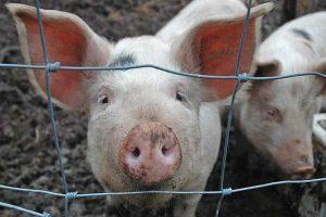 Anibiotics-Superbugs-and-lIvestock