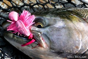 silver_salmon_polly_wog