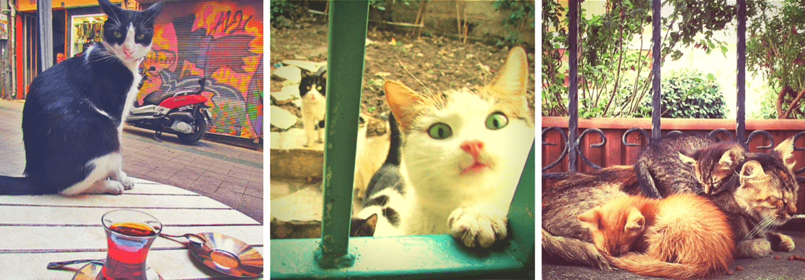 Istanbul, the city of stray cats