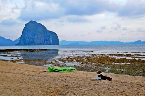 Dog resting in Marimegmeg beach - Ultimate guide to El Nido, Palawan (Philippines)