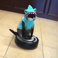 roomba-gato-tiburón