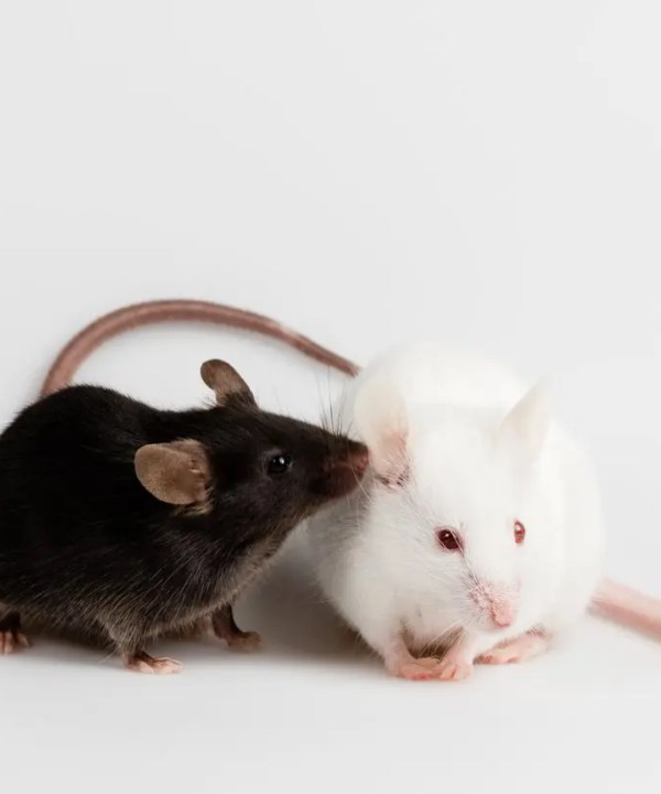 Study Social Interaction with Centre Scientific Behavioral Assays | Centre Scientific