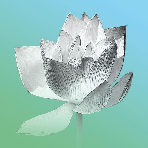 Bild Lotusblume, Mina, Wandbilder, Bilder online kaufen, Lotusblume, Bilder für das Wohlbefinden, Wellnessbilder, Energiebilder, Feng Shui bilder, Wanddeko, Leinwandbilder
