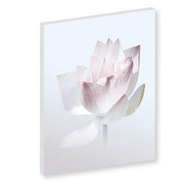 Wandbild Weiss, Lotusblume in zarten Farben, Leinwandbilder, Feng Shui Bilder, Lotus, Harmonie, Wanddeko, Tapete